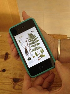 iPhone fern2 for blog