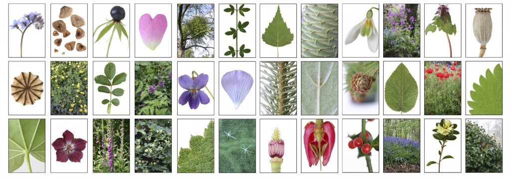 visual botany plant parts matrix again