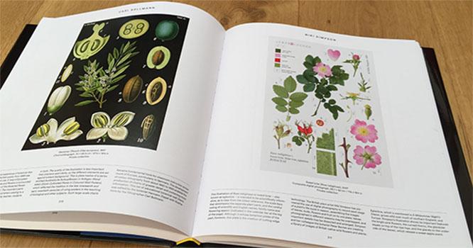 phaidon-book-open-350-x-666