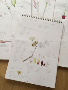Sketch pads with Chimonanthus at front tiny for web