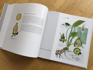 Nuphar book proof 800 x 1067